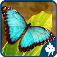 Butterfly Jigsaw Puzzles 1.9.17 APK Cracked Downlaod – PRO for android