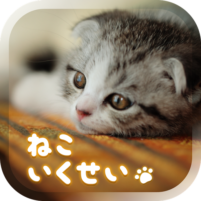Cat Simulation Game 3D 1.7.3 APK Cracked Downlaod – PRO for android