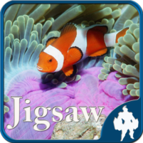 Sea Life Jigsaw Puzzles 1.9.17 APK Cracked Downlaod – PRO for android