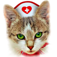 Cat therapy – jigsaw puzzles with cats purring 1.8.5 APK Cracked Downlaod – PRO for android