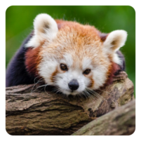GUESS THE ANIMAL QUIZ 8.18.3z APK Cracked Downlaod – PRO for android